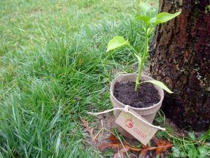 planta_ecologica_ecofira_calaf_web_2016